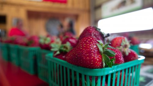 Fresh farm to table produce at Norfolk County